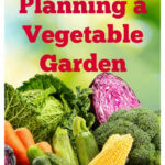 Basic Steps To Planning A Vegetable Garden – ISaveA2Z