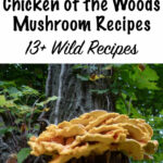 Chicken Of The Woods Mushroom Recipes