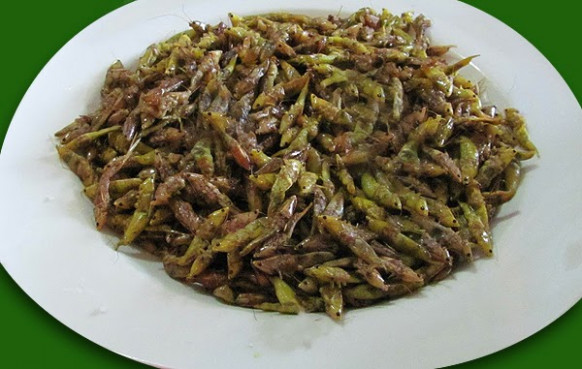 Crispy Grasshopper for Dinner Anyone? ~ Edible Gold ~ GOLD ...