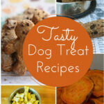 Easy & Delicious Homemade Dog Treat Recipes