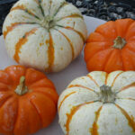 Festive Fall Dinner, Stuffed Baby Pumpkins, Washed & Ready To Prep