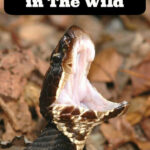 How To Avoid A Snake Bite In The Wild – ISaveA2Z