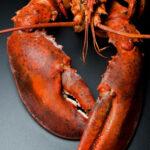 How To Cook Lobster (with Recipes) | Lobsters, Healthy …