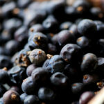 Juniper Berry Recipes: Mulled Wine, Sauces, Jams – Great …