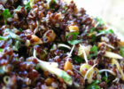 Lime Summer Quinoa Salad Recipe   Greener Ideal