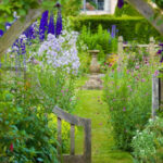 Summer Backyard Cottage With Delphinium – Start A Easy …